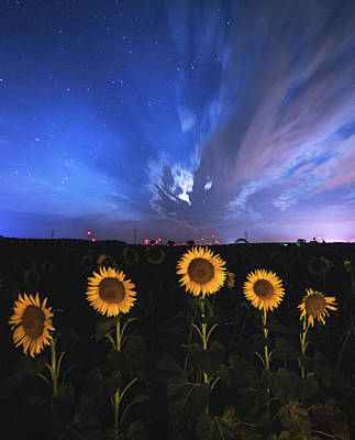 Sunflowers Royalty-Free and Rights-Managed Images - Sunflowers Long Exposure by Cale Best