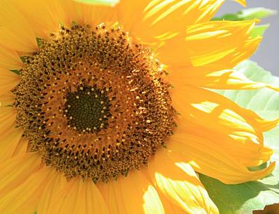 Art Print featuring the photograph Sunflowers  by Marna Edwards Flavell