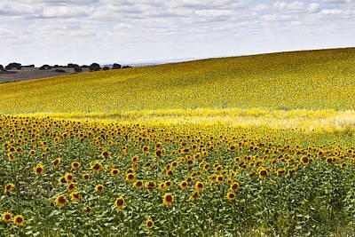 Sunflowers Art Print by Mauricio Reis