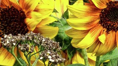 Photograph - Sunflowers by Mikki Cucuzzo