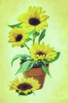 Flower Still Life Mixed Media - Sunflowers  by Olga Hamilton