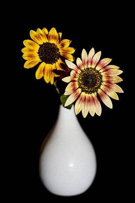 Sunflowers On Black Background And In White Vase Art Print by Vishwanath Bhat