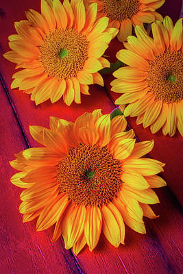 Sunflowers On Red Boards Art Print