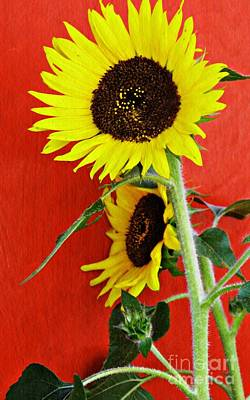 Photograph - Sunflowers On Red   by Sarah Loft