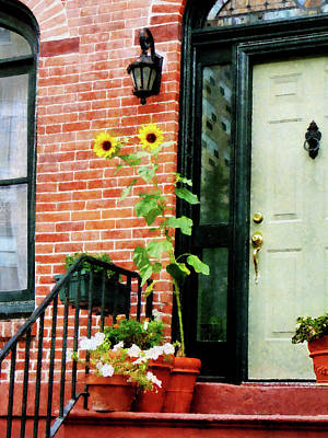 House Photograph - Sunflowers On Stoop by Susan Savad