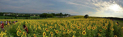 Photograph - Sunflowers, People, And Pictures 2 by Janice Adomeit