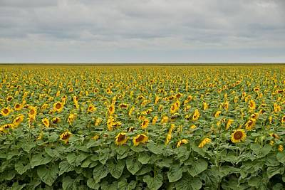 Photograph - Sunflowers by Steven Liveoak