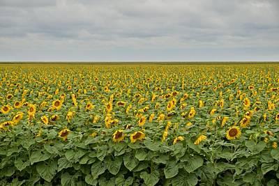 Photograph - Sunflowers by Steven Liveoak