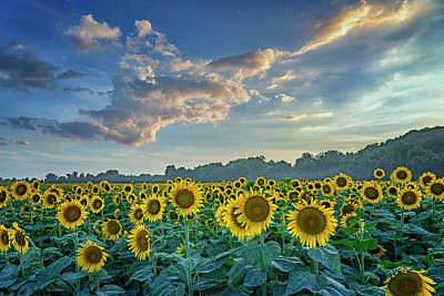 Photograph - Sunflowers Sunset Weldon Spring Mo Grk8266_07152018-hdr by Greg Kluempers