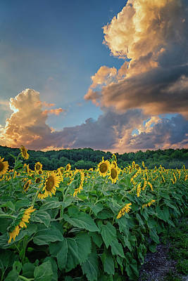 Photograph - Sunflowers Sunset Weldon Spring Mo Grk8303_07152018-hdr by Greg Kluempers