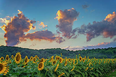 Photograph - Sunflowers Sunset Weldon Spring Mo Grk8368_07152018-hdr by Greg Kluempers