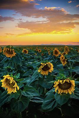 Photograph - Sunflowers Under A Sunset Sky by John De Bord