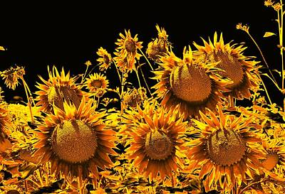 Digital Art - Sunflowers Up Front And Personal by Dorothy Berry-Lound
