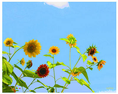Sebastian Florida Photograph - Sunflowers by W Gilroy