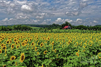 Photograph - Sunflowers With Barn by Paul Mashburn