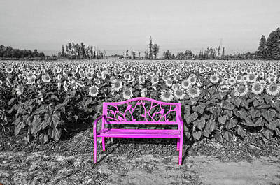 Photograph - Sunflowers With Bench by Ann Bridges