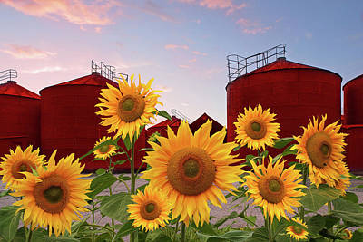 Photograph - Sunflowers With Farm Silos by Gill Billington
