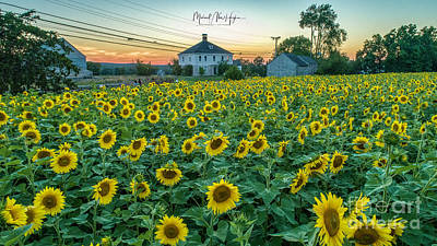 Photograph - Sunflowers For Wishes  by Michael Hughes