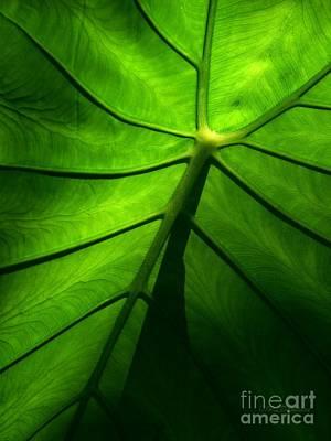 Sunglow Green Leaf Print by Patricia L Davidson
