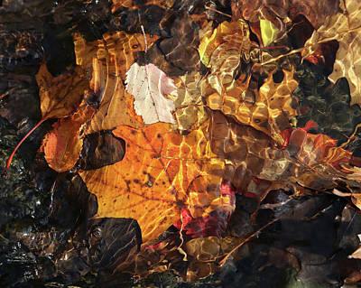 Photograph - Sunken Sunshine by Doris Potter