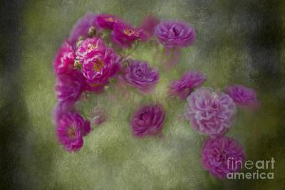 Painting - Sunkissed Roses by Eva Lechner