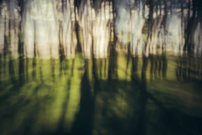 Icm Photograph - Sunlight Bursting Through by Chris Dale
