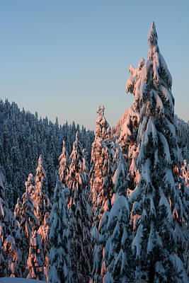 Photograph - Sunlight Covered Trees In The Mountains Of British Columbia by Pierre Leclerc Photography