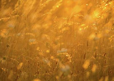 Photograph - Sunlight Glow On Grassy Field by Michael Saunders