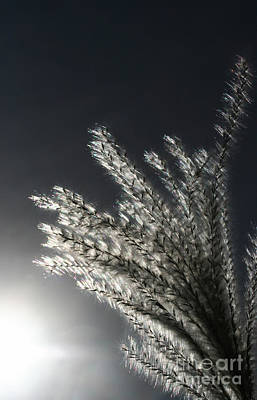 Photograph - Sunlight Grass by Steve Augustin