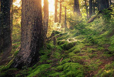 Sunlight In The Forest Art Print by Tracy Munson
