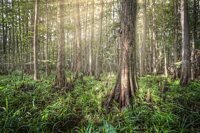Photograph - Sunlight In The Glade by Debra and Dave Vanderlaan