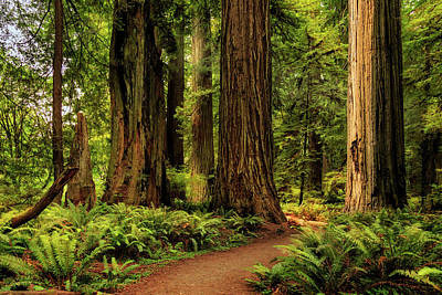 Art Print featuring the photograph Sunlight In The Redwoods by James Eddy