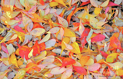 Photograph - Sunlight On Barberry Leaves by Michele Penner