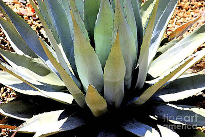 Photograph - Sunlight On Blue Agave - Digital Art by Carol Groenen