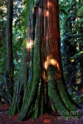 Photograph - Sunlight On Cedars by Terry Elniski