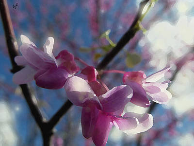 Digital Art - Sunlight On Redbuds by Shelli Fitzpatrick