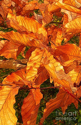 Photograph - Sunlight On The Leaves by Judi Bagwell
