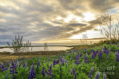 Photograph - Sunlight Over Skjalfandi by Silken Photography