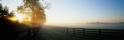 Sunlight Passing Through Trees, Horse Art Print by Panoramic Images