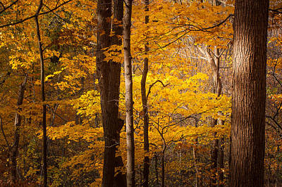 Photograph - Sunlight Peeks Into The Forest by Joni Eskridge