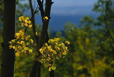 Southwestern States Photograph - Sunlight Shines On Golden Aspen Tree by Raul Touzon