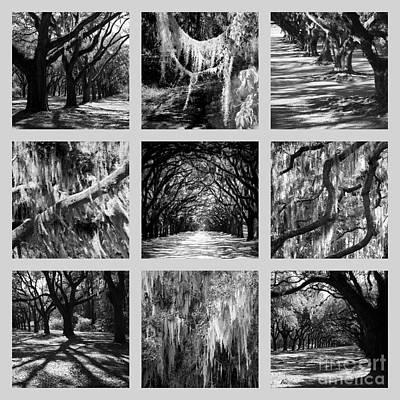 Sunlight Through Live Oaks Collage Art Print by Carol Groenen