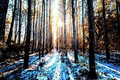 Photograph - Sunlight Through The Trees by Van Sutherland