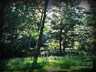 Frank J Casella Royalty-Free and Rights-Managed Images - Sunlight Through Trees and Fence by Frank J Casella
