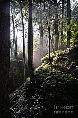 Sunlight Through Trees At Beartown State Park 3129c Art Print