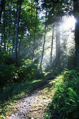 Oregon State Photograph - Sunlight Through Trees, Ecola State by Natural Selection Craig Tuttle