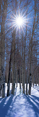 Flagstaff Wall Art - Photograph - Sunlit Aspens by Mikes Nature