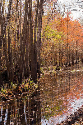 Photograph - Sunlit Autumn Backwater At Waccamaw River Park by MM Anderson