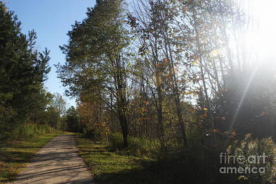 Photograph - Sunlit Autumn Path by Samiksa Art
