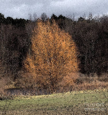 Photograph - Sunlit Autumn Tree Watercolor Filter by Conni Schaftenaar